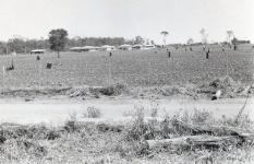 Plantacoes-fazenda-Caseiro