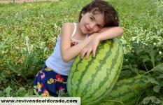 Producao de melancia